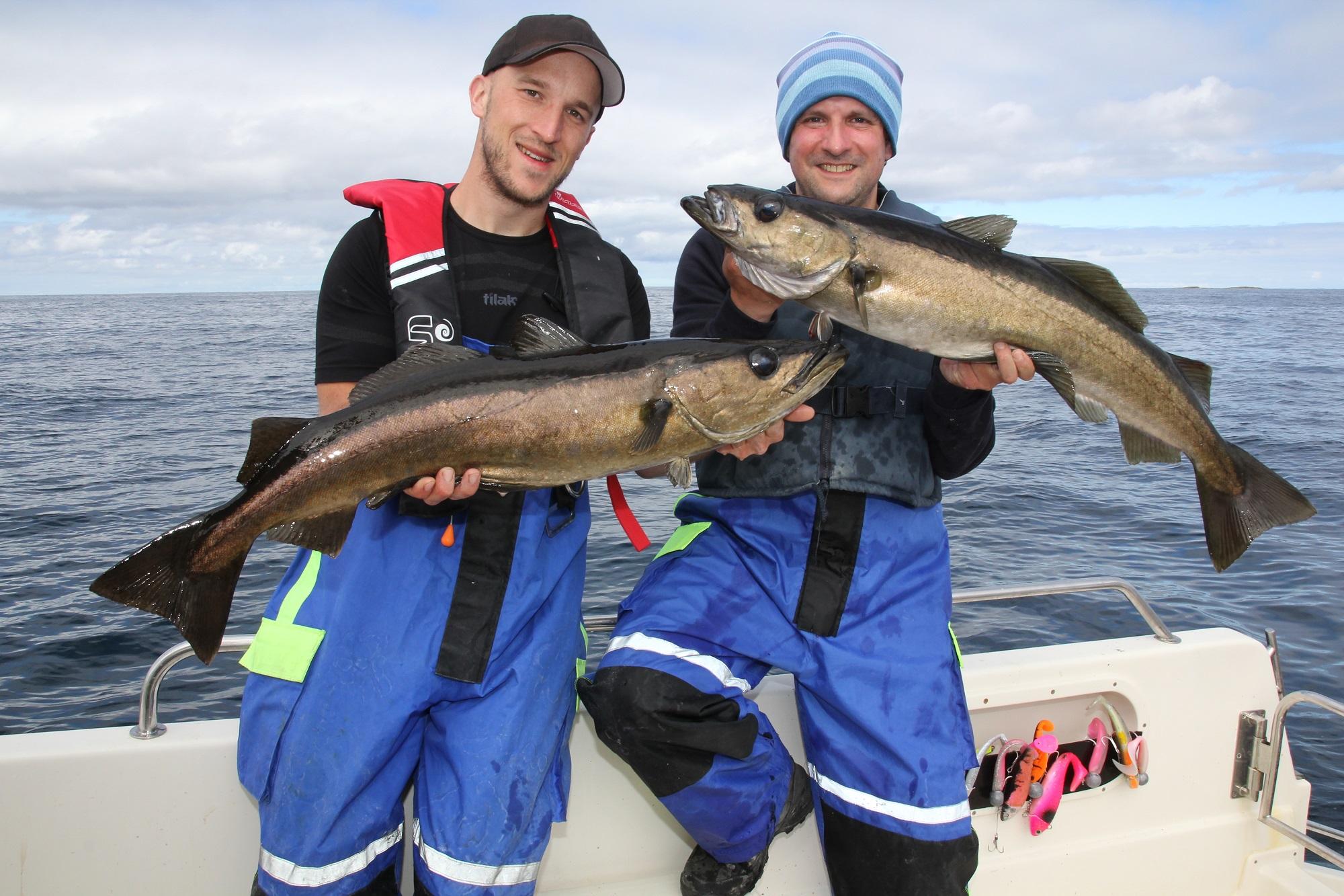 Pollacks von 80 bis 90 Zentimetern Länge sind schon echt gute Fische. Ein Pollack kommt selten alleine. Ist einer gelandet, gelangen häufig weitere Exemplare an Bord (Foto: Sebastian Boch)