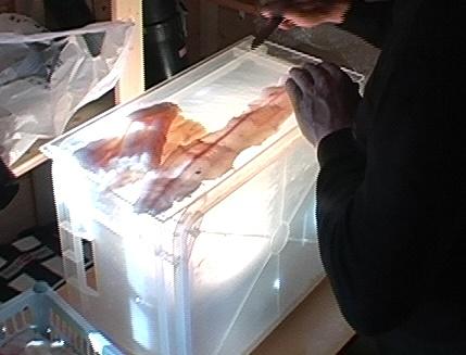 Die einfache Version zum Aufspüren der Fadenwürmer im rohem Fisch ist eine transparente Transportbox mit reingestelltem Halogenstrahler. Dies ist eine simple Sache und gut für jeden Norwegenurlaub