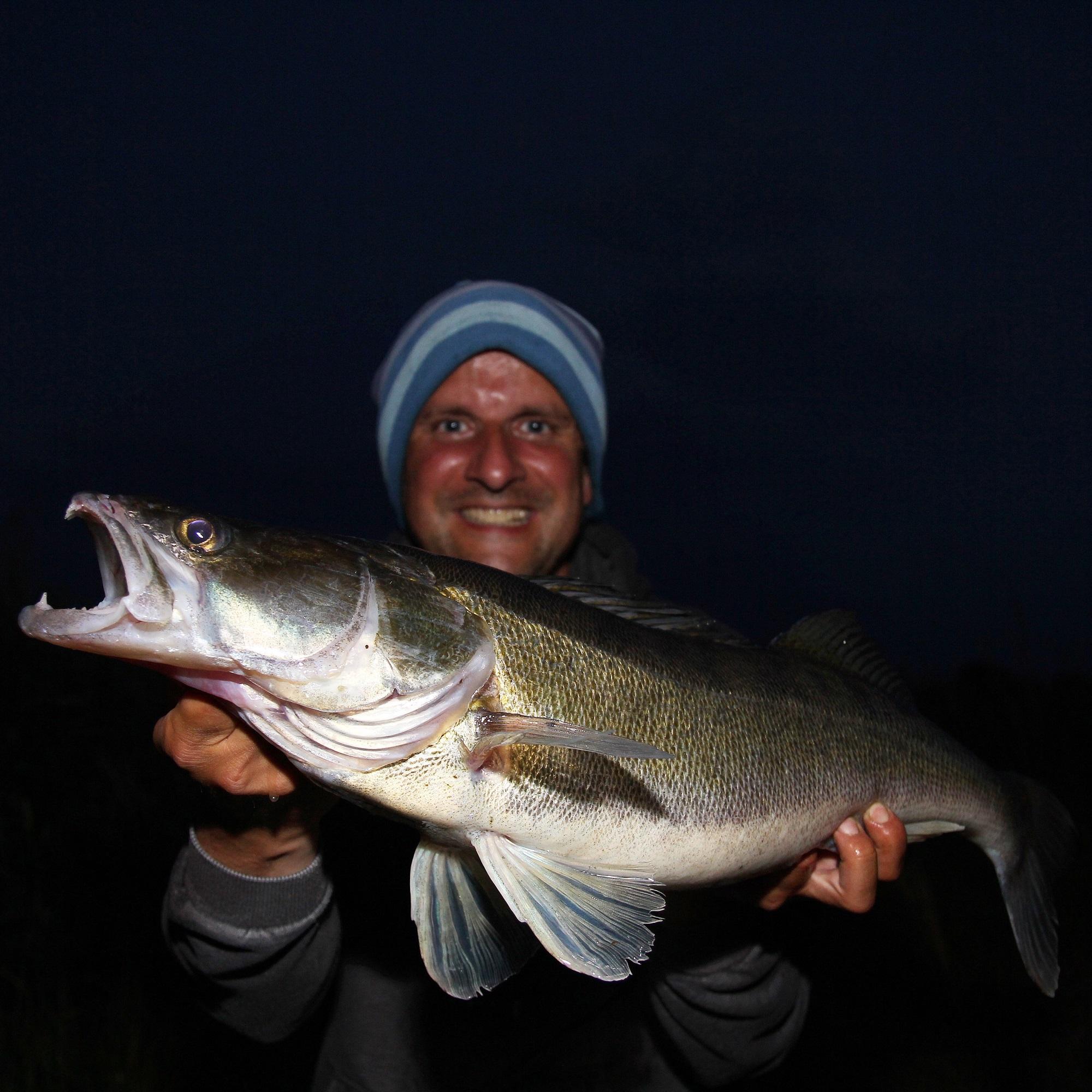 Was für ein genialer Zander aus dem Nord-Ostsee-Kanal. Dieser Raubfisch nahm den neuen Gummifisch auf voller Wurfdistanz volley