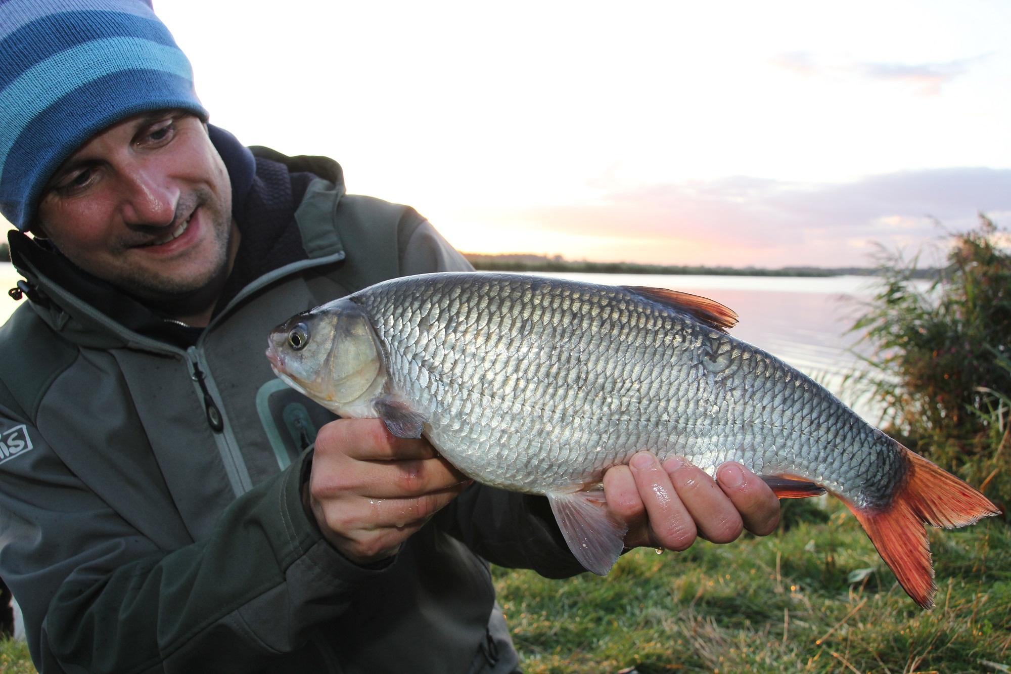 Der Aland kommt hauptsächlich in Flüssen vor, ist aber auch in manchen Seen und im Brackwasser der Ostsee anzutreffen (Foto: Jesco Peschutter)
