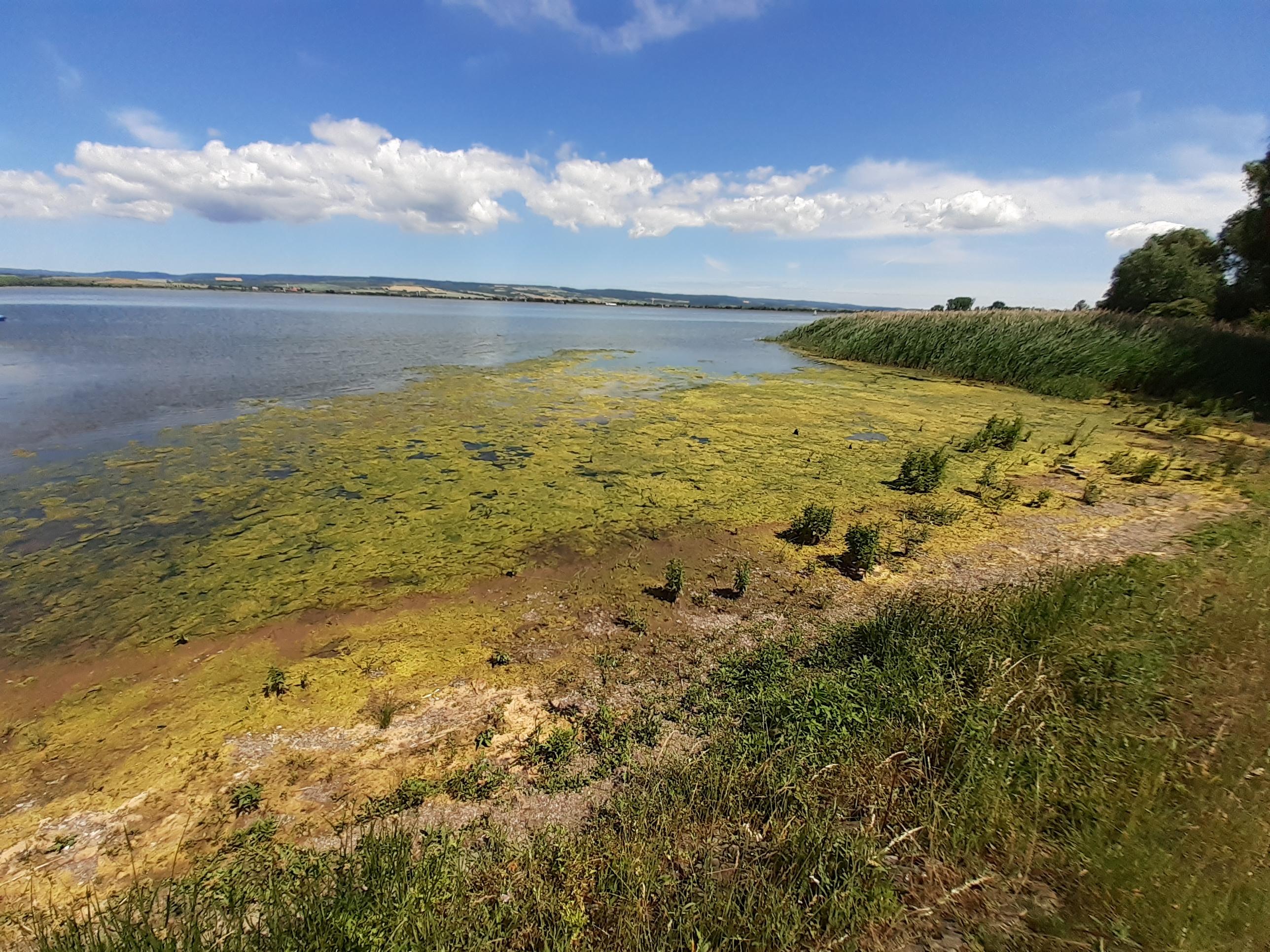 algen Stausee Kelbra.jpg