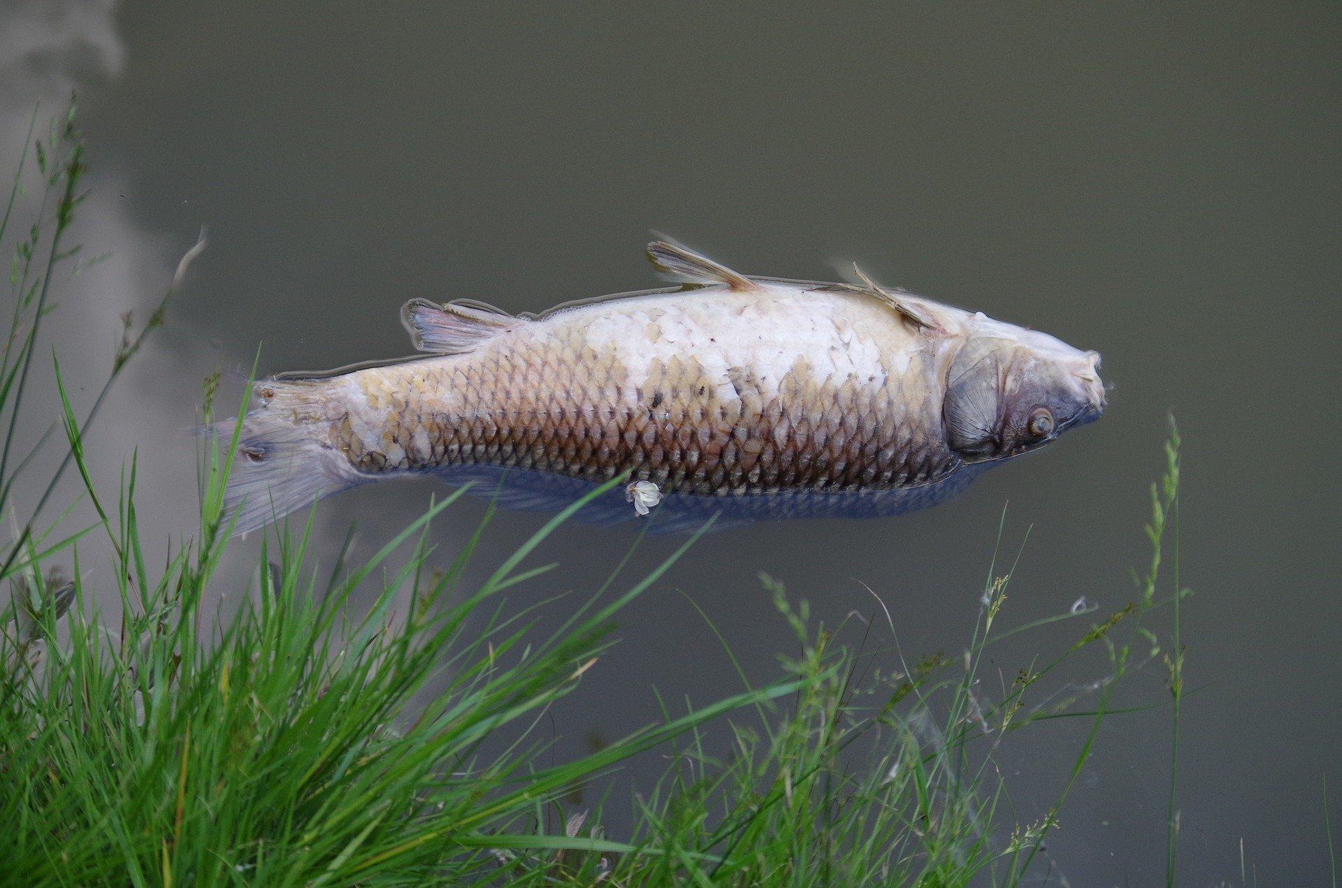 In Berlin kommt es regelmäßig im Sommer zu Fischsterben (Foto: Beispielbild/Pixabay)
