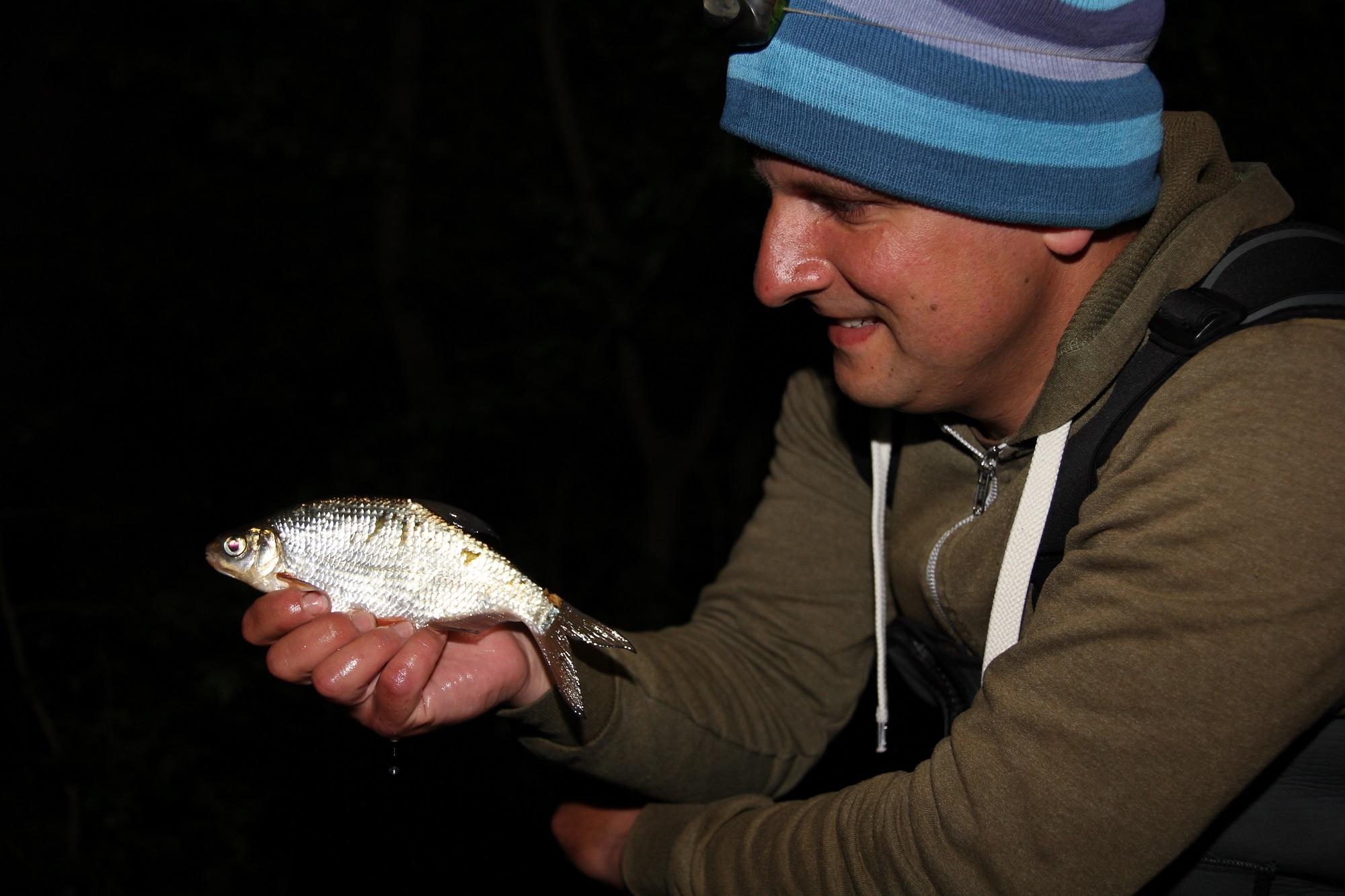 Im Vergleich zum Brassen sind Güster eher klein. Fische zwischen 15 und 25 Zentimetern gehören zum Durchschnitt an vielen Gewässern